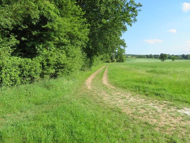 Field boundary west of Oakley
