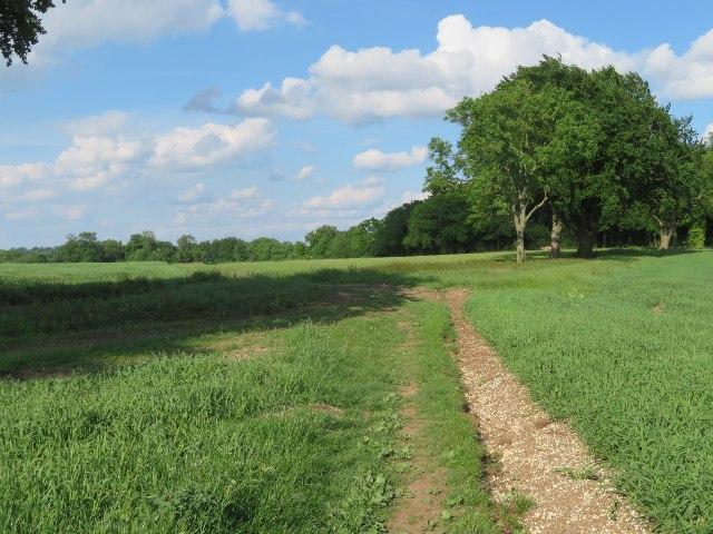 Path through Oakley Park
