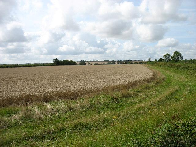 Farmland east of Islip