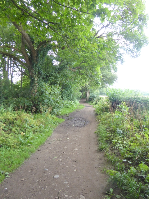 Teesdale Way near Low Coniscliffe