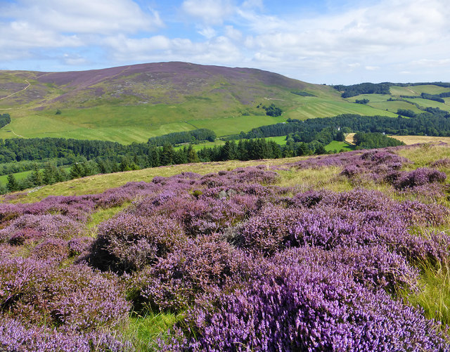 August in the Yarrow Valley