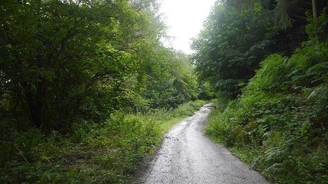Road, Bucknell Wood