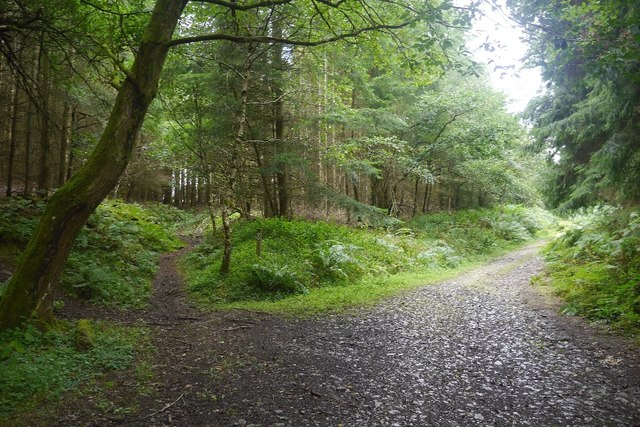 Path junction, Bucknell Wood