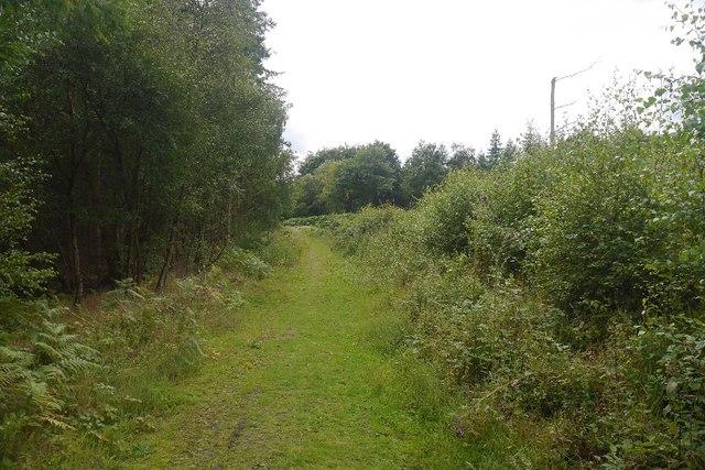 Grassy path, Bucknell Wood