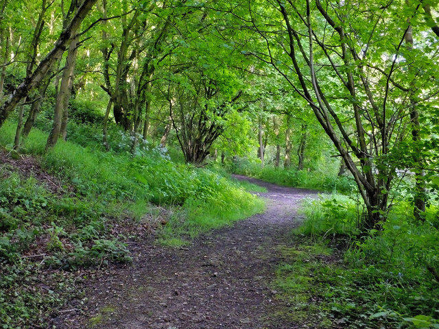 Storrs Wood