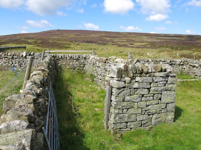 Small sheepfold at High Puddingthorn