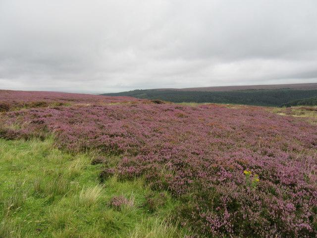Battersby Moor