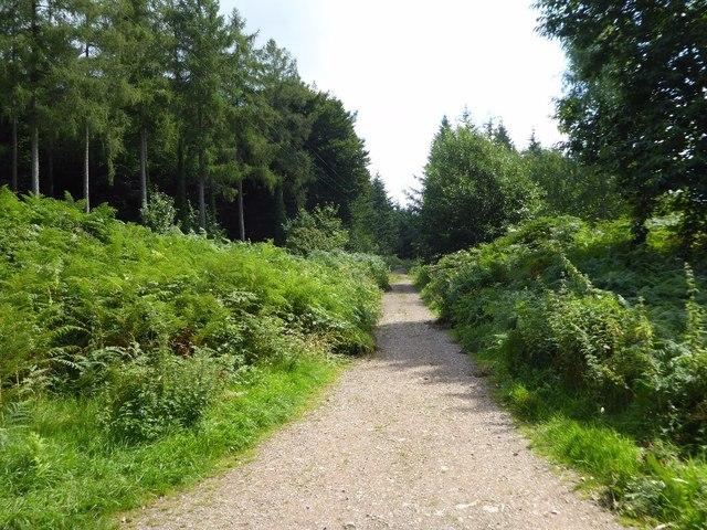 Forest path, Shutcastle Inclosure