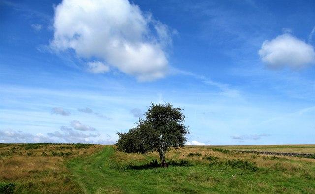 Last tree before the moor