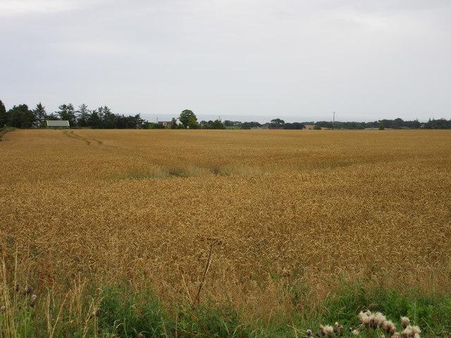 Field at Balmashie