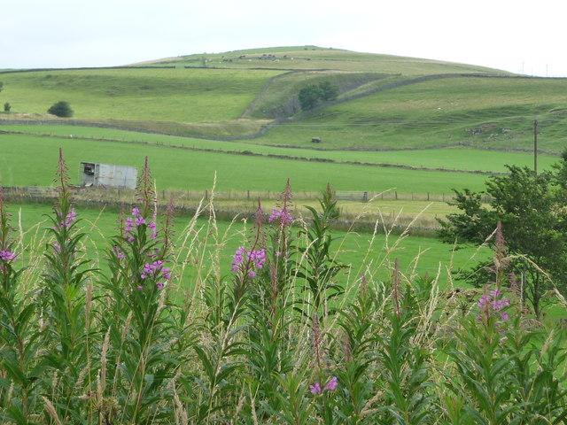 Railway cutting, south of Parsley Hay