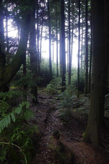 Bucknell Wood