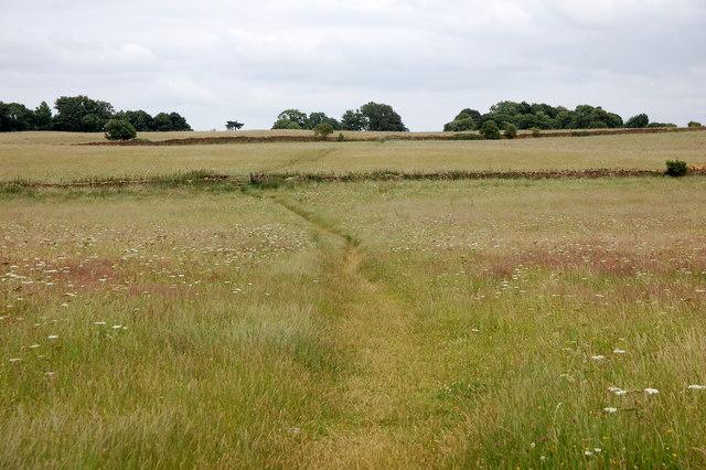 Wildflower meadow, Butcher's Hill
