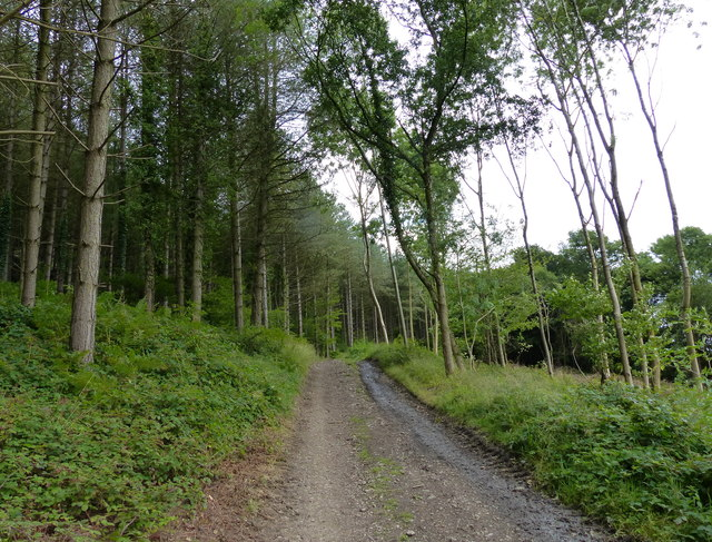 Track on the southern slopes of the Wrekin