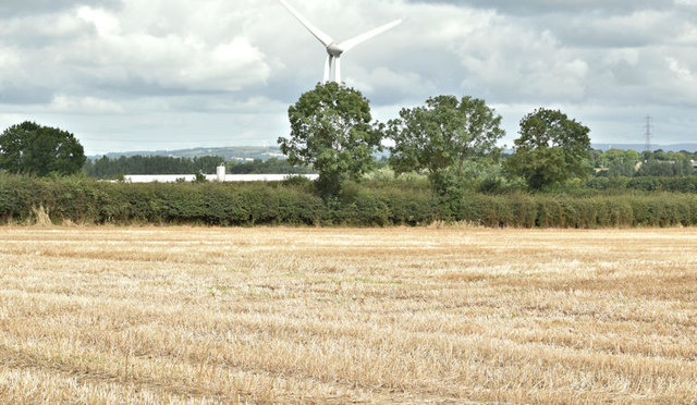 Field, Craigarogan, Mallusk (August 2017)