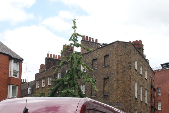 View of a birch tree and chimneys above the shops on Newport Court from Newport Place