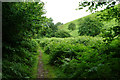 ST1342 : Path in Smith's Combe by Bill Boaden
