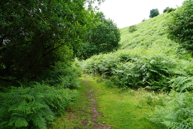 Path in Smith's Combe