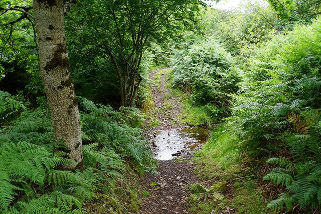 Crossing the stream in Smith's Combe
