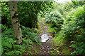 ST1341 : Crossing the stream in Smith's Combe by Bill Boaden