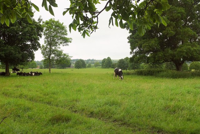 Cattle, Lytes Cary