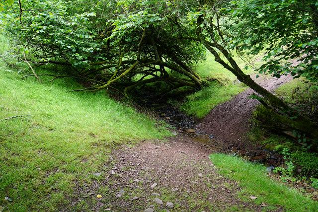Path in Herridge Combe