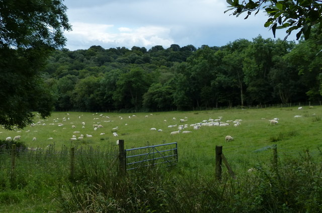 Sheep in a field near the Wrekin