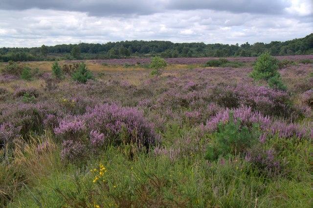 Chobham Common National Nature Reserve