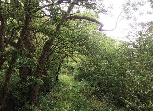 Overgrown Footpath Along Green Dyke