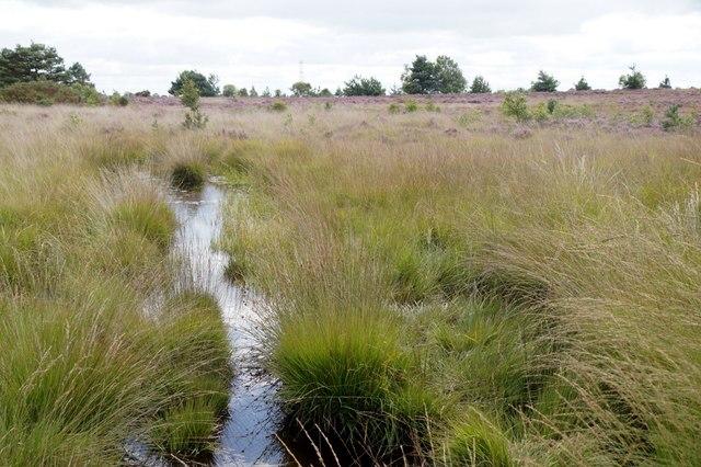 Chobham Common National Nature Reserve at Albury Bottom