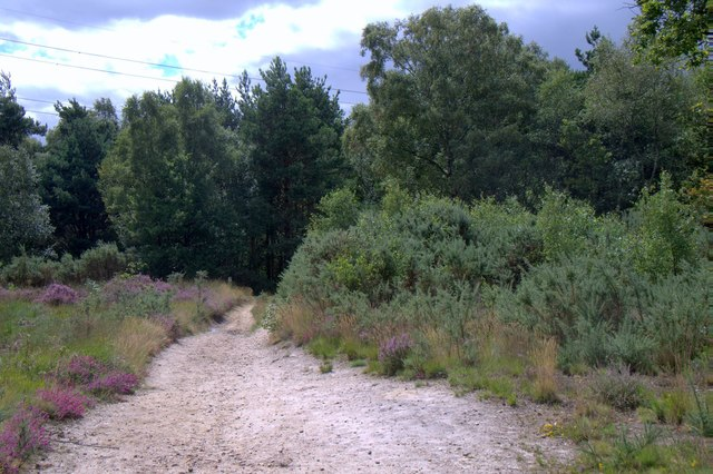 Track at Clearmount, Chobham Common