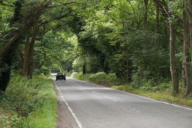 Staple Hill, the road crossing Chobham Common