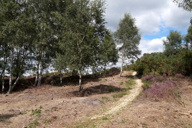 Chickabiddy Hill, Chobham Common