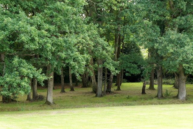 Small wood at Burrowhill, Chobham