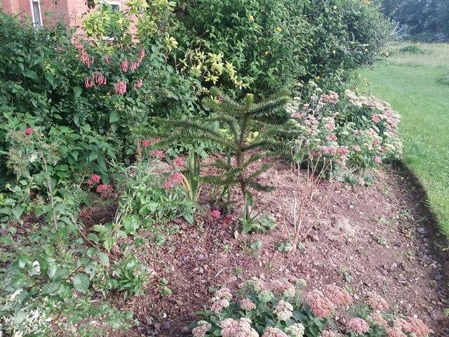 Garden on Tideway Close, Ham