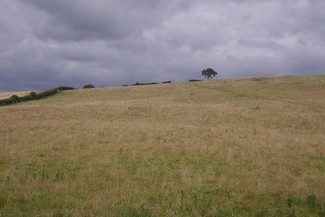 Field on Garn Bank