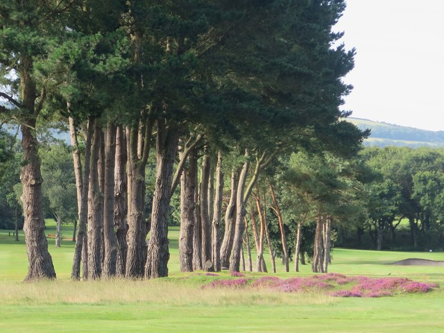 Line of conifers, Shanklin and Sandown Golf Club, Isle of Wight