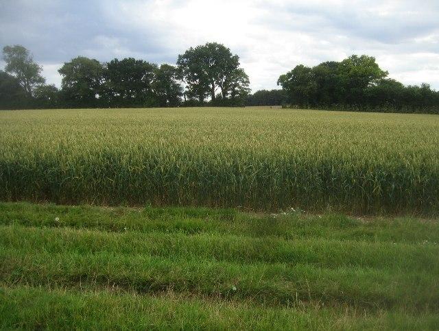 Farmland south of South Wood