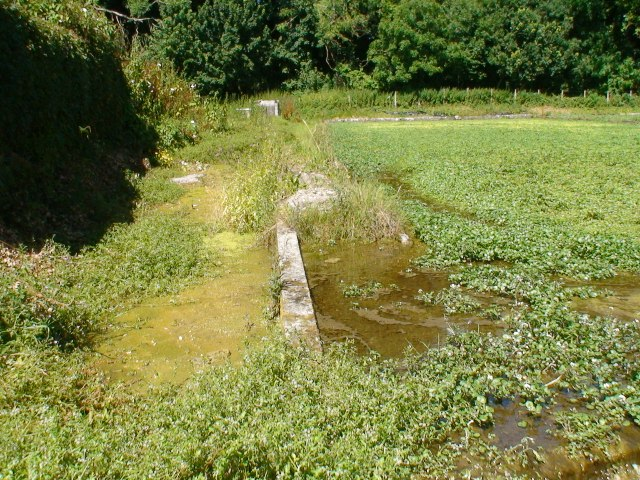 West Lea watercress beds