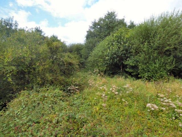 Dilhorne Wood