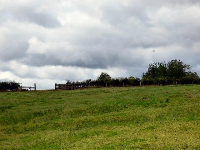 Field gate near Stansmore Hall