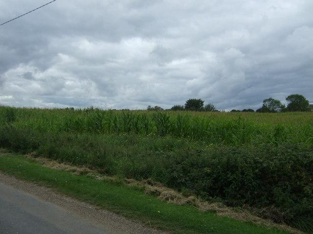 Crop field off Nixhill Road