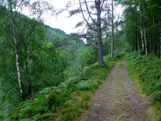 Woodland path at Carie