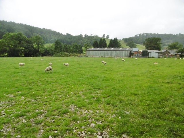 Pen-y-bont Llanerch Emrys, sheep grazing