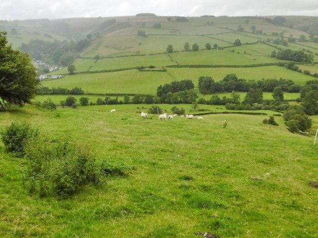 Tregeiriog, sheep grazing