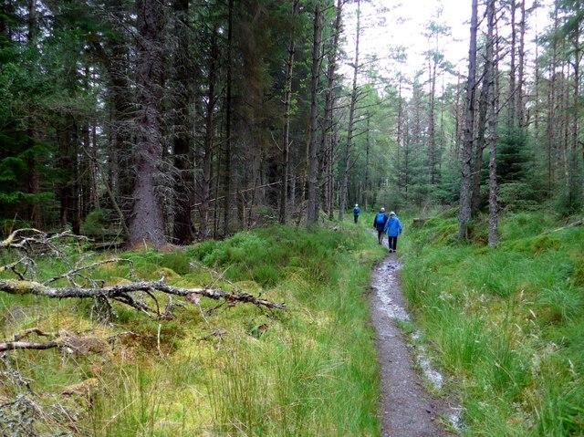 Path through the Rannoch Forest