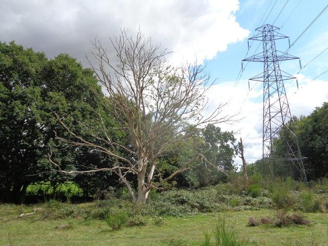 Dead Tree and Pylon