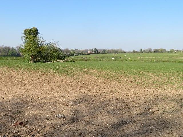 Pony paddock west of Oakley