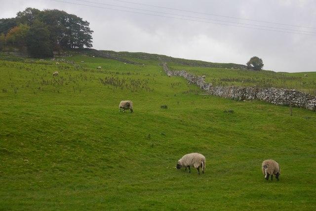 Fields, Bainbridge