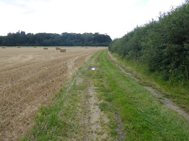 Cornfield off Stone Lane